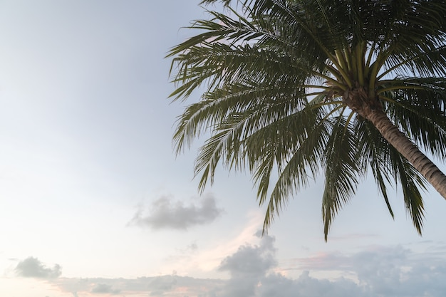 Тропические кокосовые пальмы