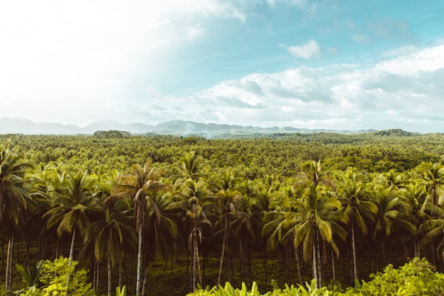 熱帯のヤシの木の森