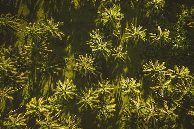 열 대 코코넛 나무 숲