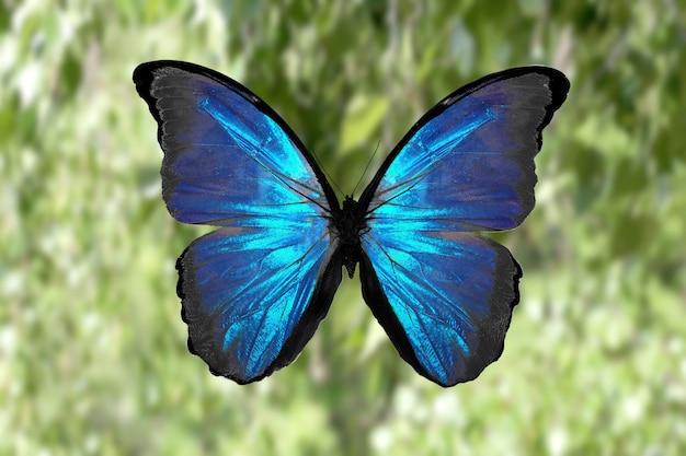 자연의 배경에 대해 열 대 색된 나비입니다. 화려한 나방. 고품질 사진