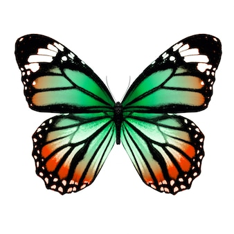 Тропическая красочная бабочка, изолированные на белом фоне