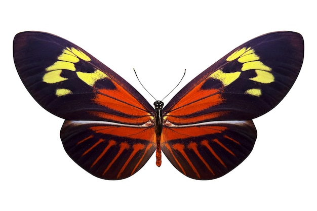 白い背景で隔離の熱帯のカラフルな蝶