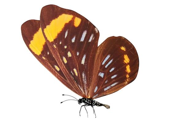 白で隔離される熱帯のカラフルな蝶