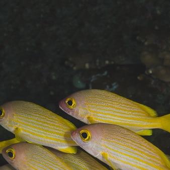 열대 다채로운 바다 물고기