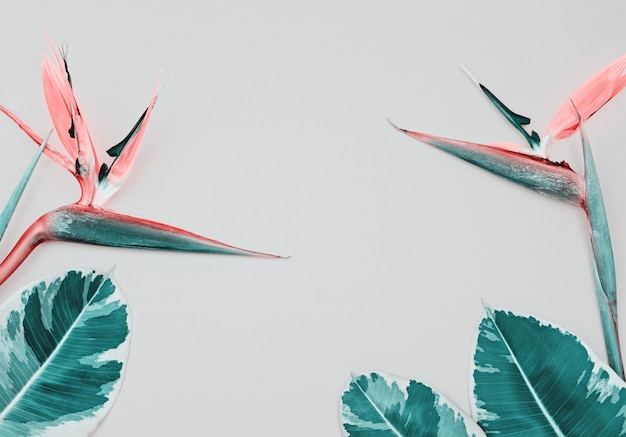 Tropical composition with bird of paradise and leaves on pink