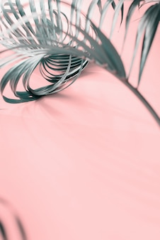 Tropical curl palm leaf background flat lay top