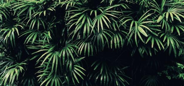 Tropical dark green leaf background.