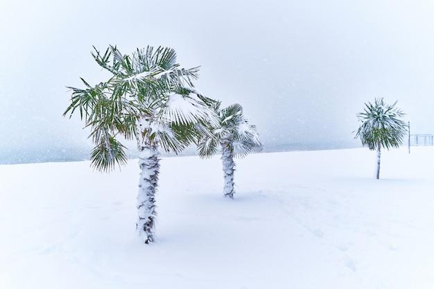 雪で覆われた熱帯常緑のヤシの木