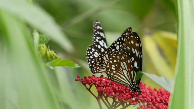 緑の葉の上に座っているジャングルの熱帯雨林の熱帯のエキゾチックな蝶、マクロのクローズアップ。春の楽園