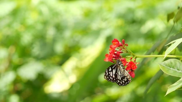 Тропическая экзотическая бабочка в тропических лесах джунглей сидит на зеленых листьях