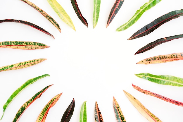 白い背景の上の熱帯のエキゾチックな色の葉のフレーム。フラットレイ、上面図