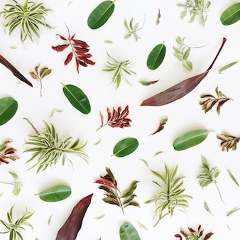 Tropical exotic colorful leaves pattern on white
