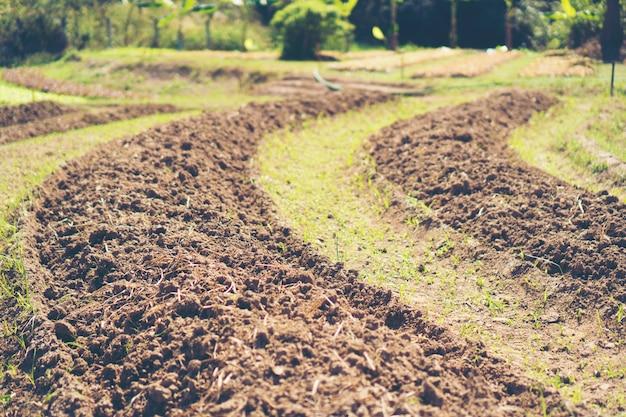 Tropical farm field
