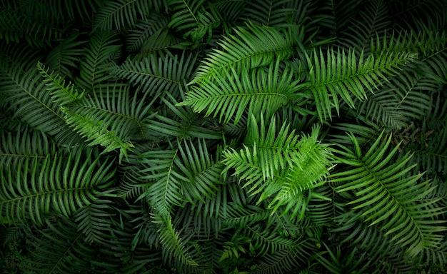 열 대 고 사리 잎, 정글 녹색 패턴 배경 나뭇잎.