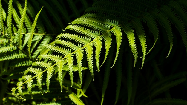Tropical fern leaves with shadows
