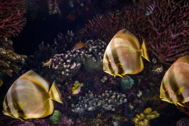 海洋水族館の熱帯魚
