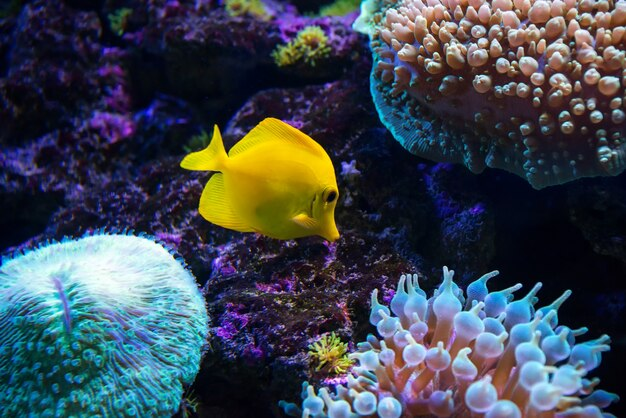 Tropical fish swims near coral reef