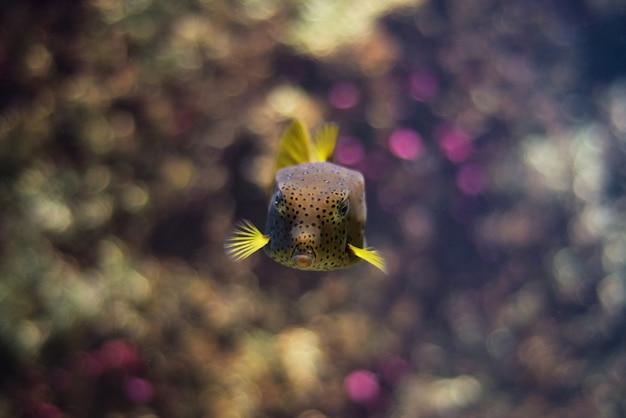 Тропическая рыба.