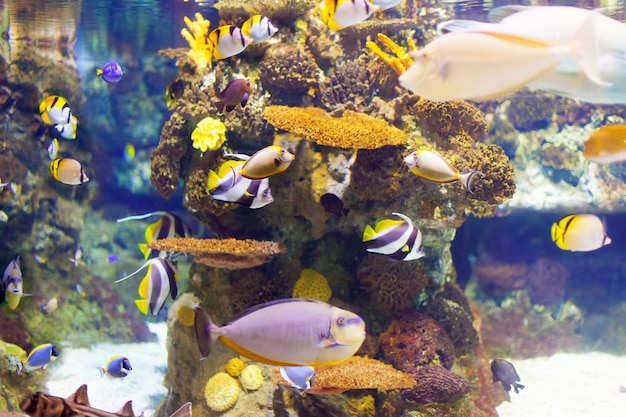 Tropical fishes at coral reef area