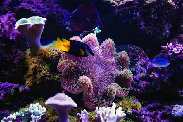 Tropical fishes swim near coral reef