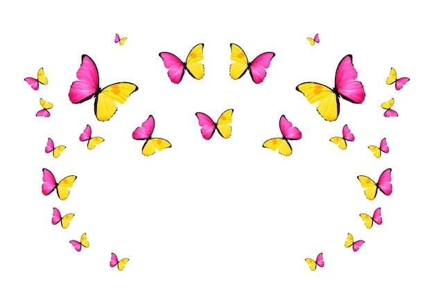 비행 색 나비 흰색 절연의 열 대 무리입니다. 열대 나방. 날아다니는 곤충. 고품질 사진