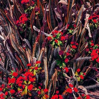 熱帯の花の背景。カナリア諸島。