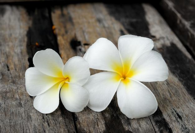 木の上の熱帯の花フランジパニ