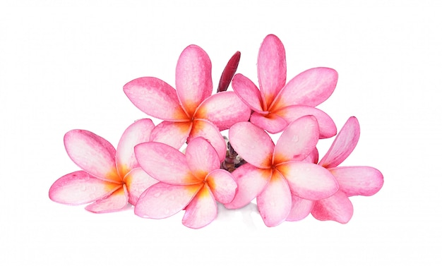 Tropical flowers frangipani (plumeria) isolated on white background