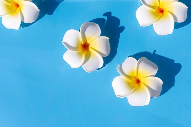 青い水の背景に熱帯の花。上面図、フラットレイ。