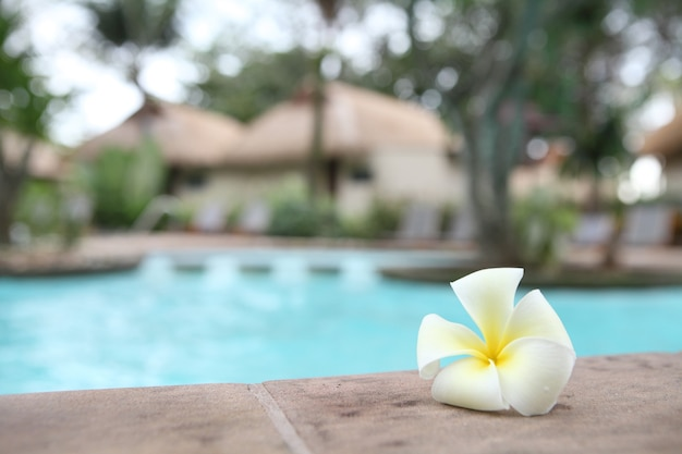 열대 꽃 수영장