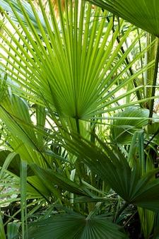 熱帯の葉と植物