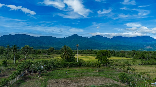 Tropical forest in aceh besar district aceh province