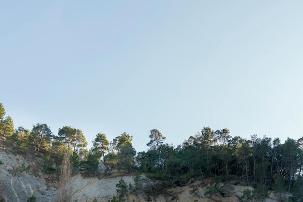 日光の下で捕獲された熱帯林
