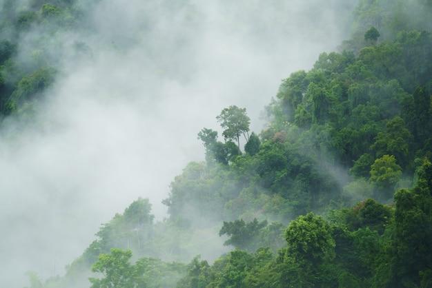 안개와 안개와 열 대 숲 풍경