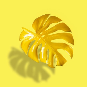 그림자와 함께 노란색 배경에 고립 된 열 대 숲 몬스테라 노란 잎