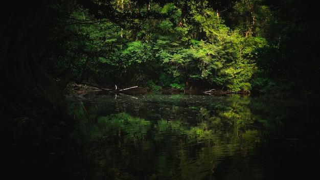 熱帯林の自然、グリーントーンスタイルの自然シーン