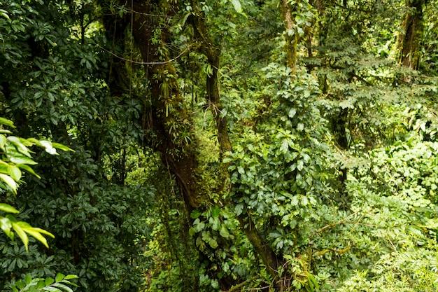 비오는 날씨에 코스타리카의 열 대 숲