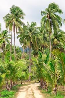熱帯林の小道、ヤシの木と山々、タイのチャン島、アジアの旅行と観光。