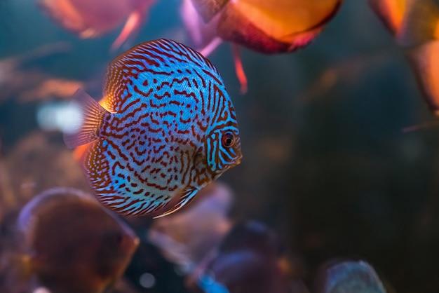 Тропический пресноводный аквариум с красивыми разноцветными рыбками под водой