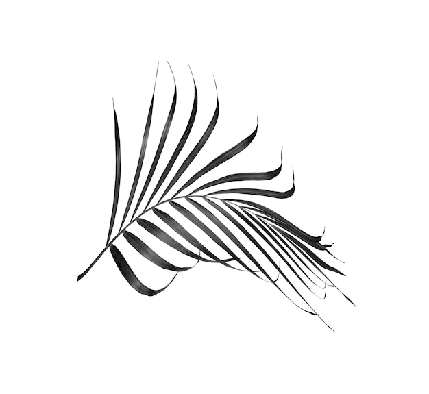 열 대 상체 검은 야자수 잎 흰색 배경에 고립