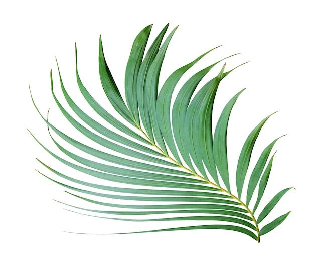 白い背景で隔離の熱帯の葉の緑のヤシの葉の木