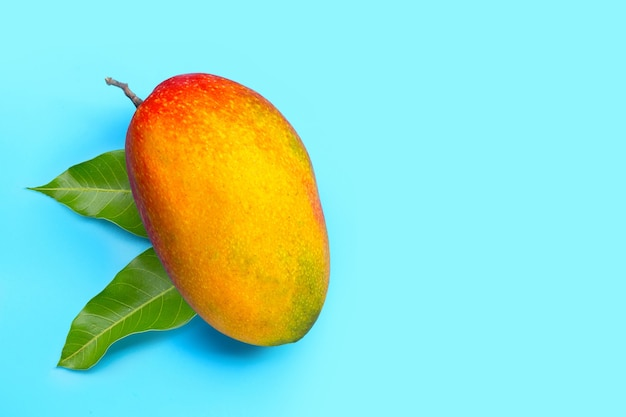 Tropical fruit, mango  on blue background. top view