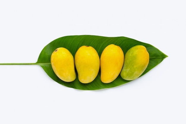 Tropical fruit, mango on green leaf on white background.
