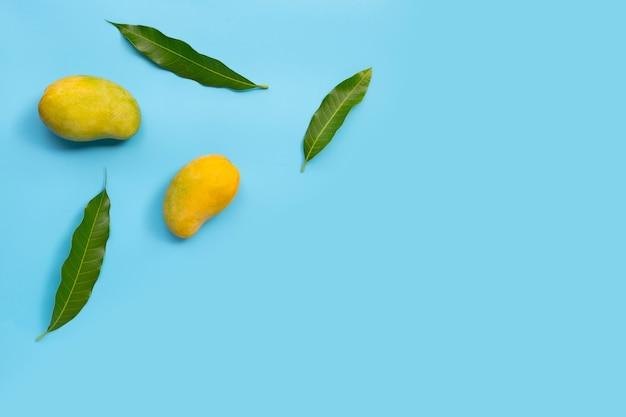 トロピカルフルーツ、青い背景のマンゴー。上面図