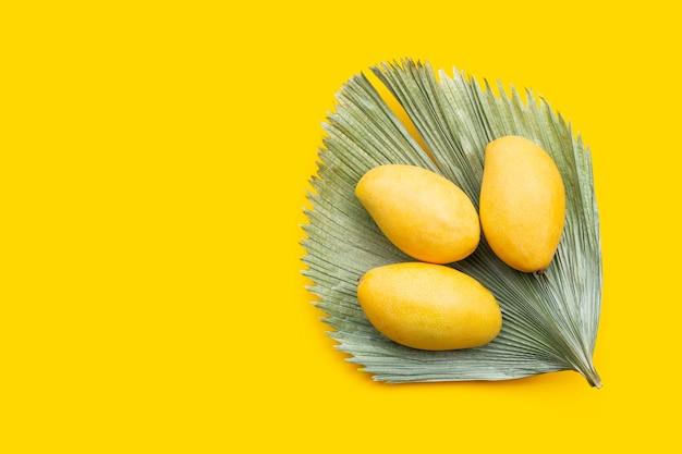 トロピカル フルーツ、黄色の背景にマンゴー。