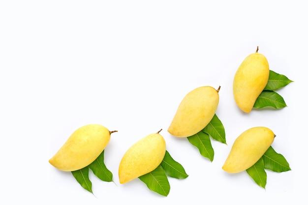 トロピカルフルーツ、マンゴー。上面図