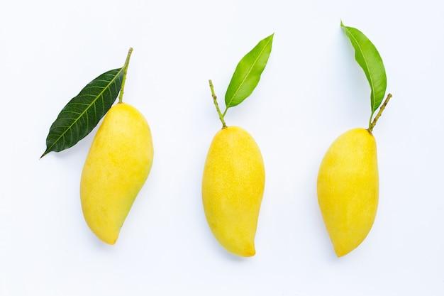 Tropical fruit, mango  on white background.
