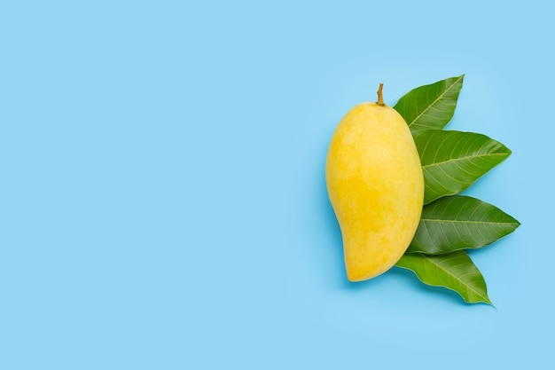 Tropical fruit, mango  with leaves on blue background. top view