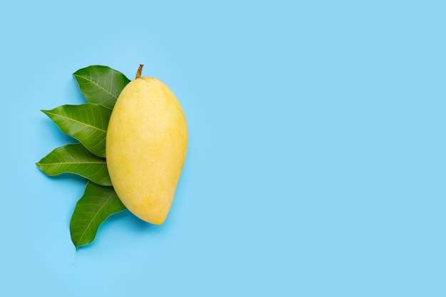 Тропические фрукты, манго с листьями на синем фоне. вид сверху