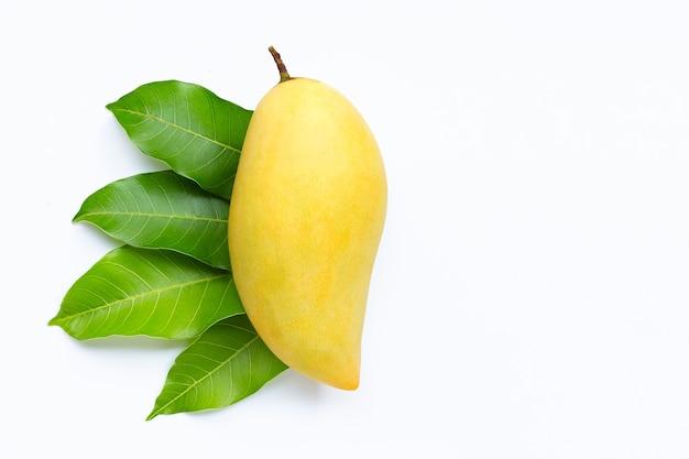 Тропические фрукты, манго с листьями на белом. копировать пространство